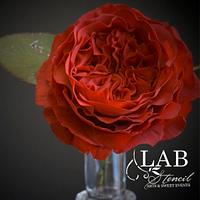 red austin rose