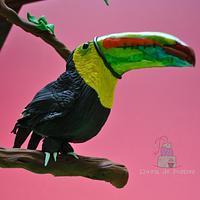 """Tucan """"Animals Rights Collaboration"""""""