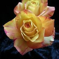 Sugar roses. Variegated colour.