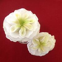 Cabbage roses