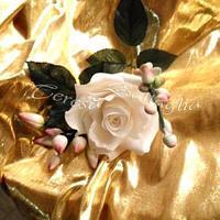 My rose by Teresa Battaglia