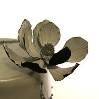 Black Magnolia by A. Diaz
