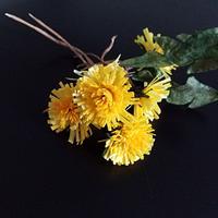 Waferpaper dandelions