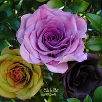 My fascination with Roses