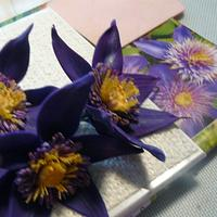 clematis flowers , w/photo ! first try by gail