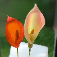 Translucent Calla Lily