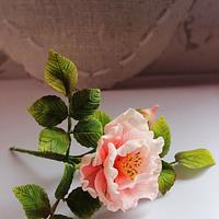 Doubled bush rose in gumpaste