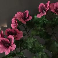 Imperial geranium