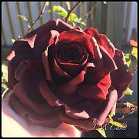 Garnet colour anniversary Rose