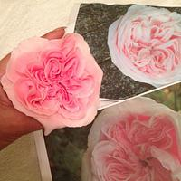 Isis Belle David Austin Style Rose nearly finished
