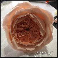 Juliet Rose Cold Porcelain