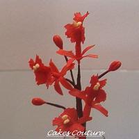 Gumpaste Epidendrum Orchids