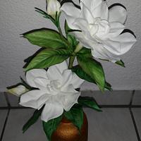 My first Gardenia...