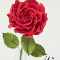 Perfect Wedding Rose