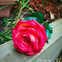 Orangy red sugar roses.