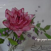 Wafer paper flowers for Art of Sugar