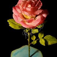 Mi dulce rosa