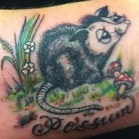 Possum (jules)