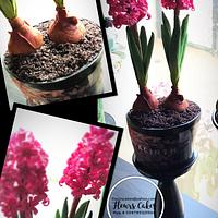 Potted Hyacinth Cake