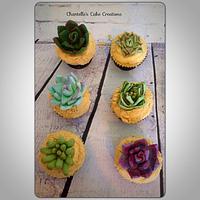 Succulant cupcakes