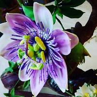 Sugar Passiflora Flower