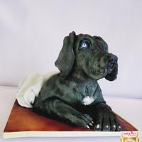 Great Dane puppy cake  by Calli Creations