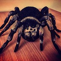 Tarantula chocolate cake topper