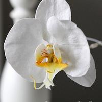 Wafer Paper Phalaenopsis Orchid