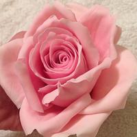 Antique Pink Icing rose by Lisa Templeton