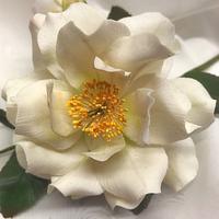 'Camellia'
