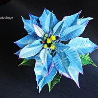 My blue Poinsettia