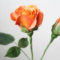 Favourite Sugar Rose