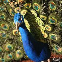 Percy Peacock