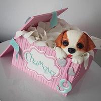Puppy in a box