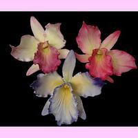 My first Cattleya Orchids