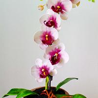 Sugar orchids in cake pot