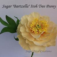 Sugar Bartzella Itoh Tree Peony  by Anne Cutajar-Wagner