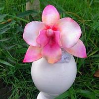 Sugar Orchid flower