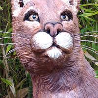 Florida Cougar (Animal Rights Collaboration)