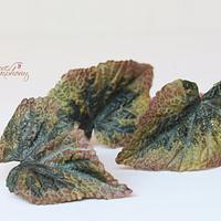 Sugar Begonia leaves