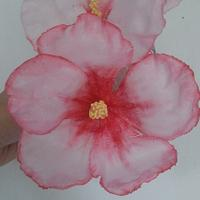 Wafer Paper Hibiscus