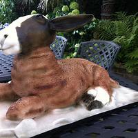 Stevie the Sheep