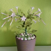 Jasmin Flower....
