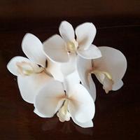 Orchid - sugar flower
