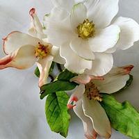 Gumpaste Magnolias