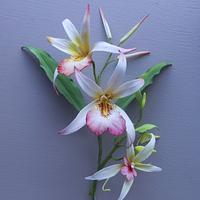 Orchids: Cold Porcelain
