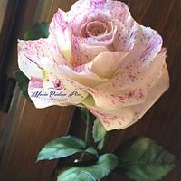 My new Rose...Sugarflowers