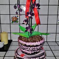 pianta di orchidee - orchid plant