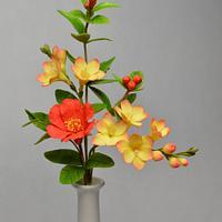 Freesia, Pomergrade flower