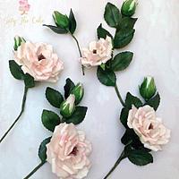 Sugar garden roses